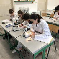 IT akadémia – biológia (11/14)