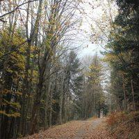 Potulky jesennou prírodou (11/21)